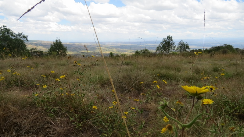 wild flowers on endebess cliff mount elgon copyright maya mangat dec 2018 (800x450)