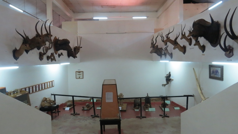 Colonel Stoneham's collection of wildlife found in the area at Kitale Museum Copyright Rupi Mangat for one time use only - 9 Feb 2019 article on Kitale Museum (800x450)