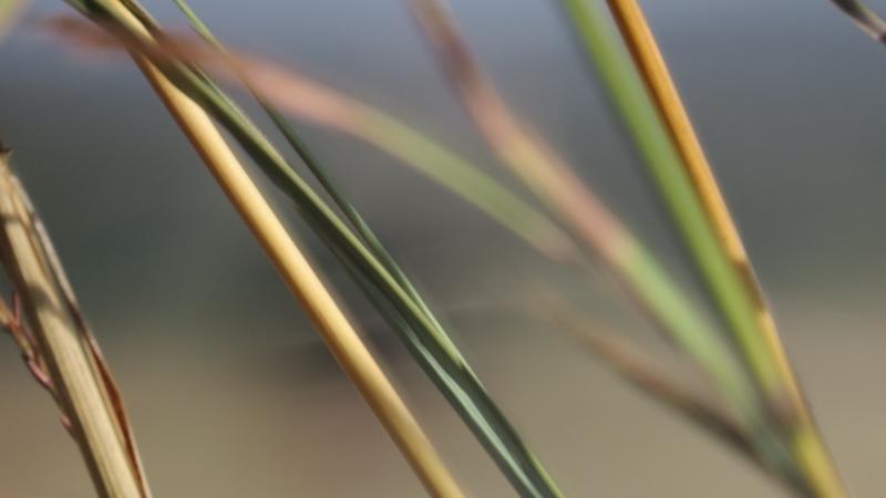 Grass stalks in Nairobi National Park February 2019. Copyright Rupi Mangat (800x450)