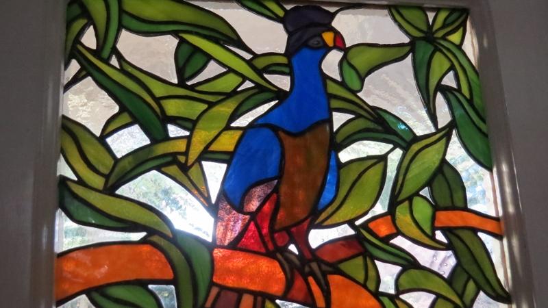 Great Blue Turaco window pane at Rondo Retreat - copyright Maya Mangat for 23 Feb 2019 (800x450)