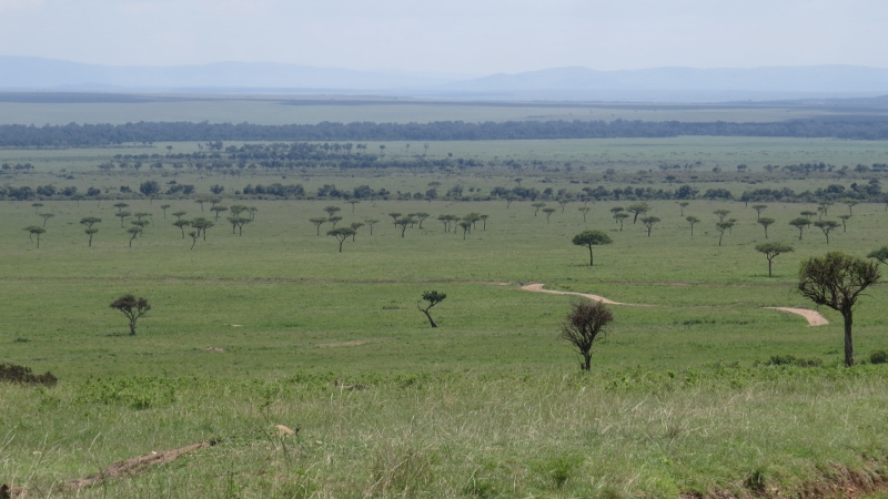 Maasai Mara Jan 2019 Copyright Rupi Mangat 2 (800x450)