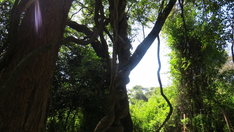 Nature trail at Kitale Museum Copyright Rupi Mangat for one time use only - 9 Feb 2019 article on Kitale Museum (800x450)