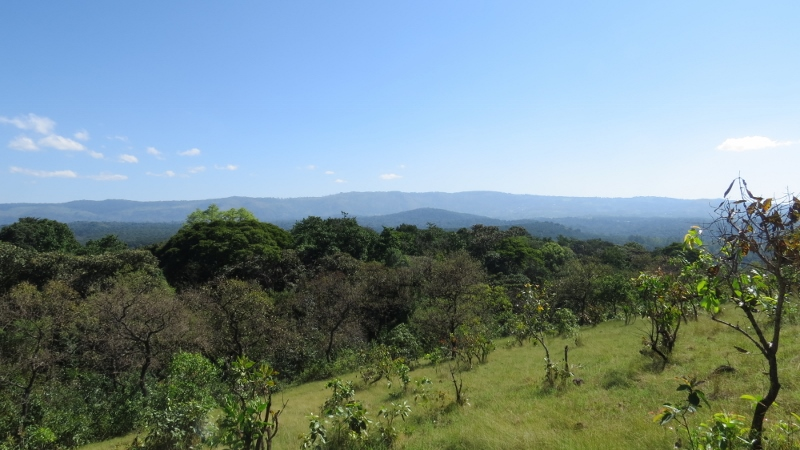 Panorama from Lirhanda Hill in Kakamega Forest of South Nandi Forest. Copyright Maya Mangat for 23 Feb 2019 (800x450)