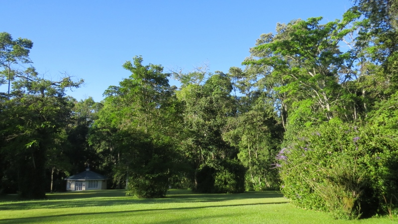 Rondo Retreat Garden and Chapel - Kakamega Forest. Copyright Maya Mangat for 23 Feb 2019 (800x450)
