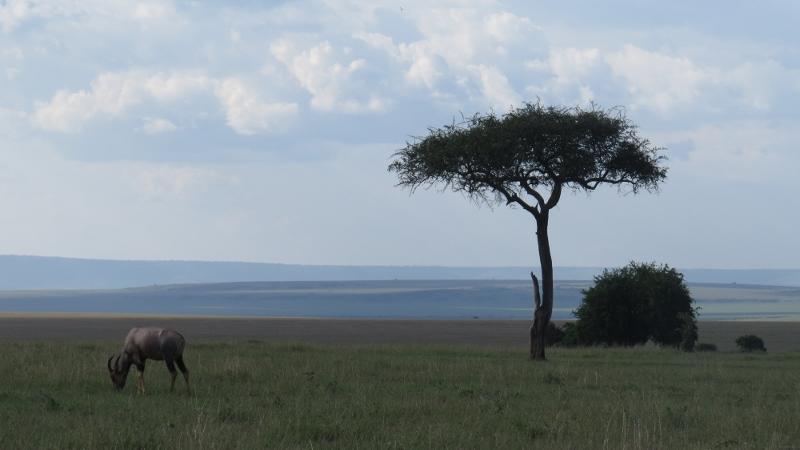Topi and Balanites aegyptiaca Maasai Mara Jan 2019 Copyright Rupi Mangat (800x450)