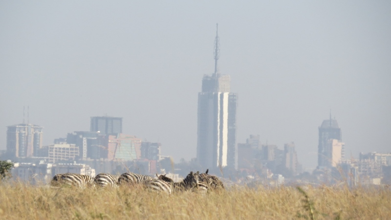 Zebra and the city in Nairobi National Park February 2019. Copyright Rupi Mangat (800x450)