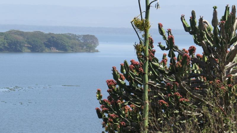 Lake Naivasha Copyright Rupi Mangat (800x450)