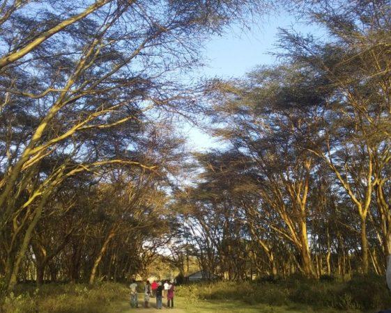 Lake Naivasha KWS ground Copyright Desire James Wainaina (800x600)