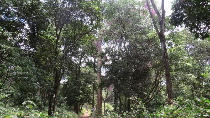 Nairobi City Park Forest path. Copyright Rupi Mangat Feb 2019 (800x450)