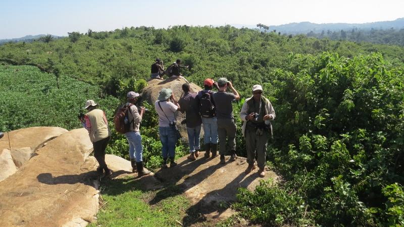 Birding in South Nandi Forest in Tea Farm at Kobujoi. May 2019. Copyright Rupi Mangat (800x450)