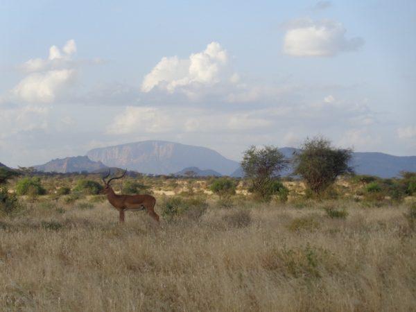 En route to Maralal from Samburu - a male impala with the iconic Ol Lolokwe mountain