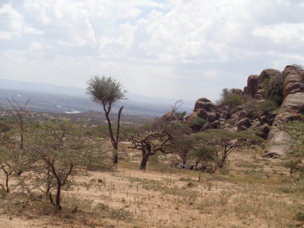 Landscape in norhern Kenya. Copyright Rupi Mangat