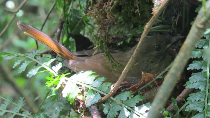 Still in the nest - South Nandi Forest. Copyright Rupi Mangat