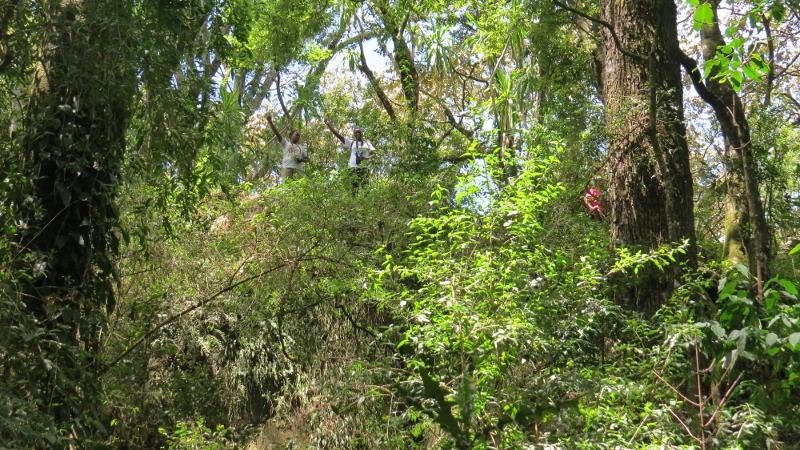 Inside South Nandi Forest at Kobujoi. May 2019. Copyright Rupi Mangat (800x450)
