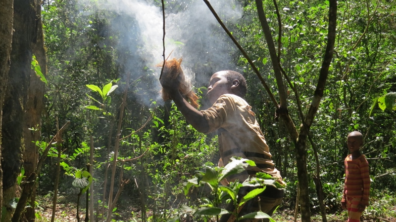 Kids smoking out bees for honey in northern part of South Nandi Forest. May 2019. Copyright Rupi Mangat (800x450)
