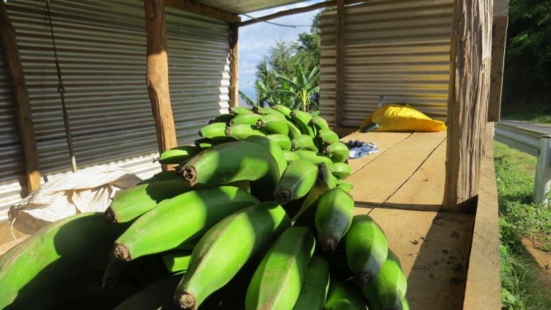 Local brand of banana called ndezi, kiangulume or mujaja near Mwachora for kimanga Copyright Rupi Mangat (800x450)