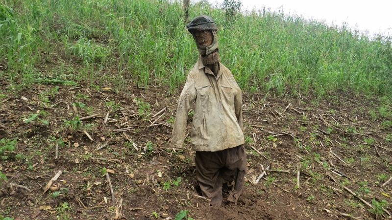 Scarecrow on farm on edge of South Nandi Forest in Kobujoii. May 2019. Copyright Rupi Mangat (800x450)