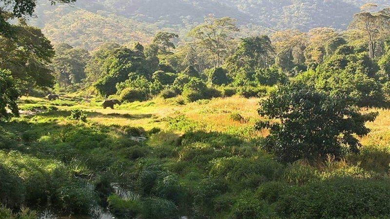 Elephants on Mathews Range. Facebook: Kitich Forest Camp