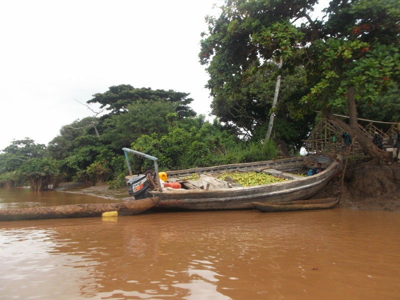 Mangoes being transported by dhow from villages upstream to kipini - rupi mangat one time use only 15 Feb 2014 (800x600)