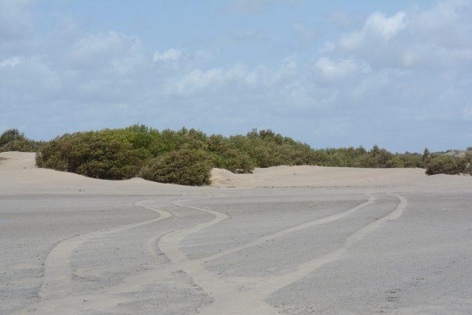 Sand flats along Sabaki estuary. Copyright Washington Wachira of Cisticola Tours Ltd (800x533)