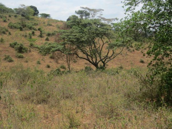At Kikwata on Ngong Hills . Copyright Rupi Mangat (800x600)