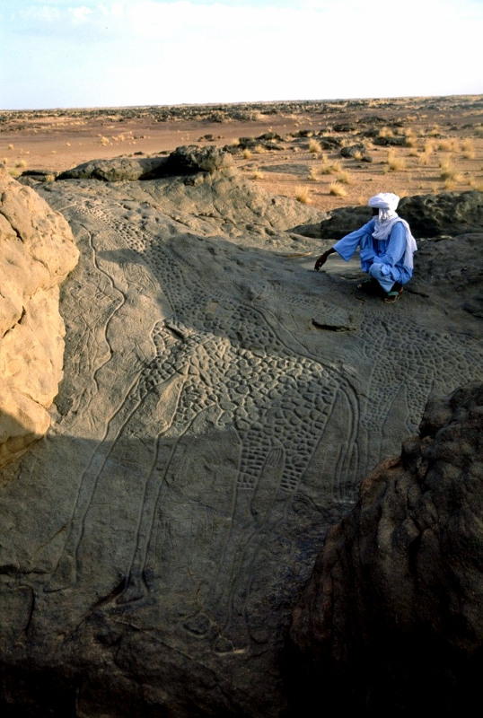 A Tuareg man by a 6,000 year life size engraving of giraffes in Niger. Copyright David Coulson of Trust for African Rock Art TARA (538x800)