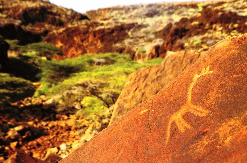Engraving of giraffe in Afgaba gorge northern Kenya made around a thousand years ago by hunter gatherers who might have been Batwa.. Copyright David Coulson of Trust for African Rock Art TARA (800x527)