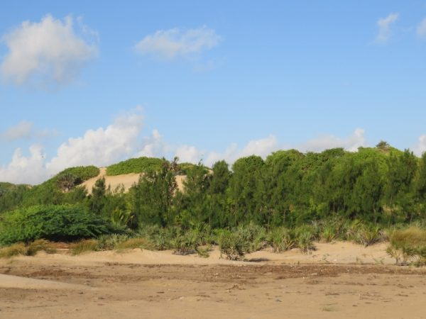 Sand dunes by Barefoot Beach camp near Malindi Copyright Rupi Mangat (800x600)