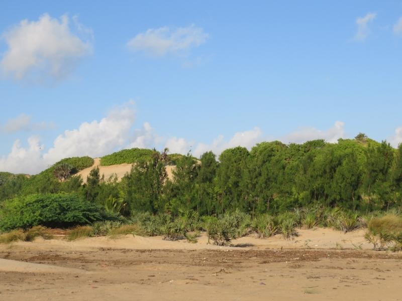 Sand dunes by Barefoot Beach camp near Malindi Copyright Rupi Mangat (800x600)