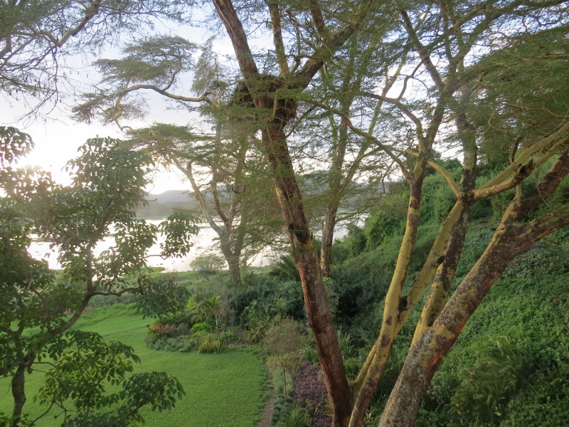 Ziwani House garden overlooking Lake Naivasha . Copyright Rupi Mangat (800x600)