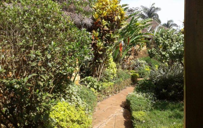 View from my room at New Court View Hotel i Masindi. Copyright Rupi Mangat (800x600)