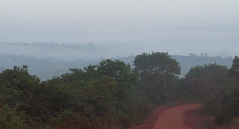 Shimba hills in mist March 2020. Copyright Rupi Mangat (800x600)